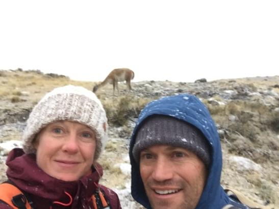 Guanacos and snowflakes