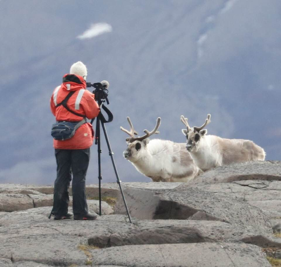 Reindeer_Arctic Lindblad Expedition